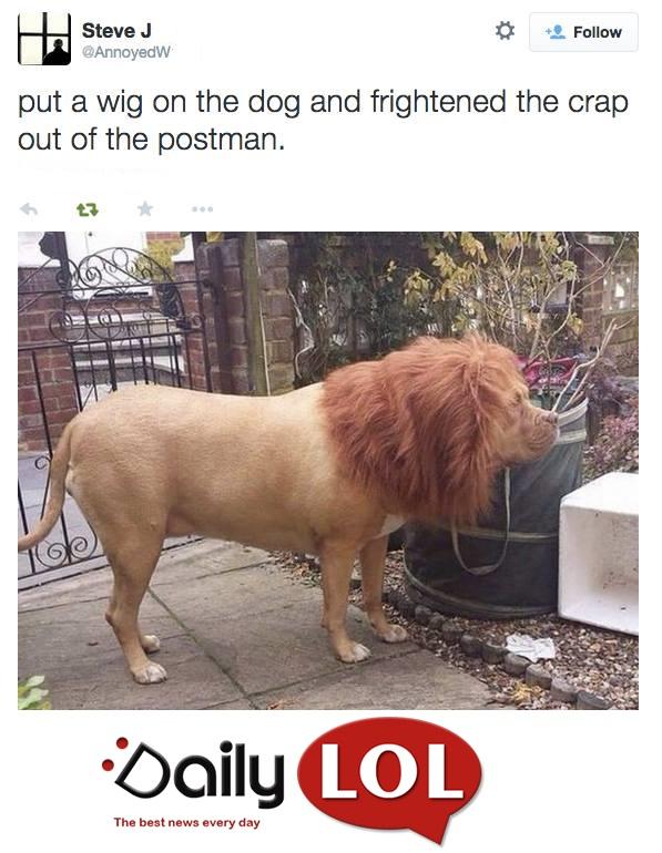 doglion