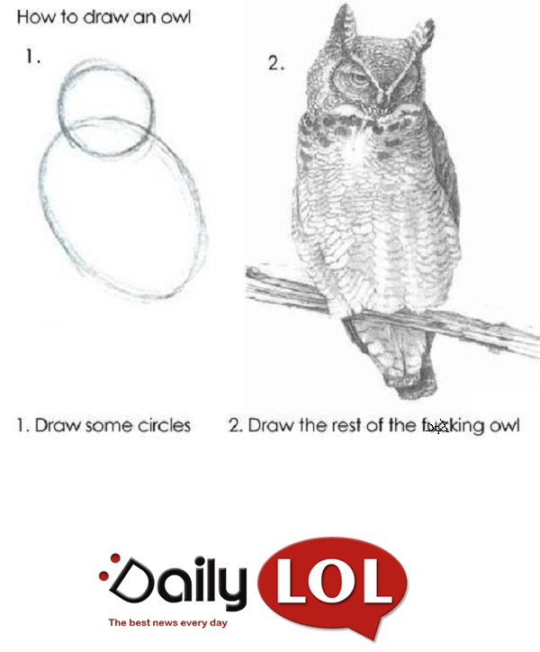 draw owl LOL