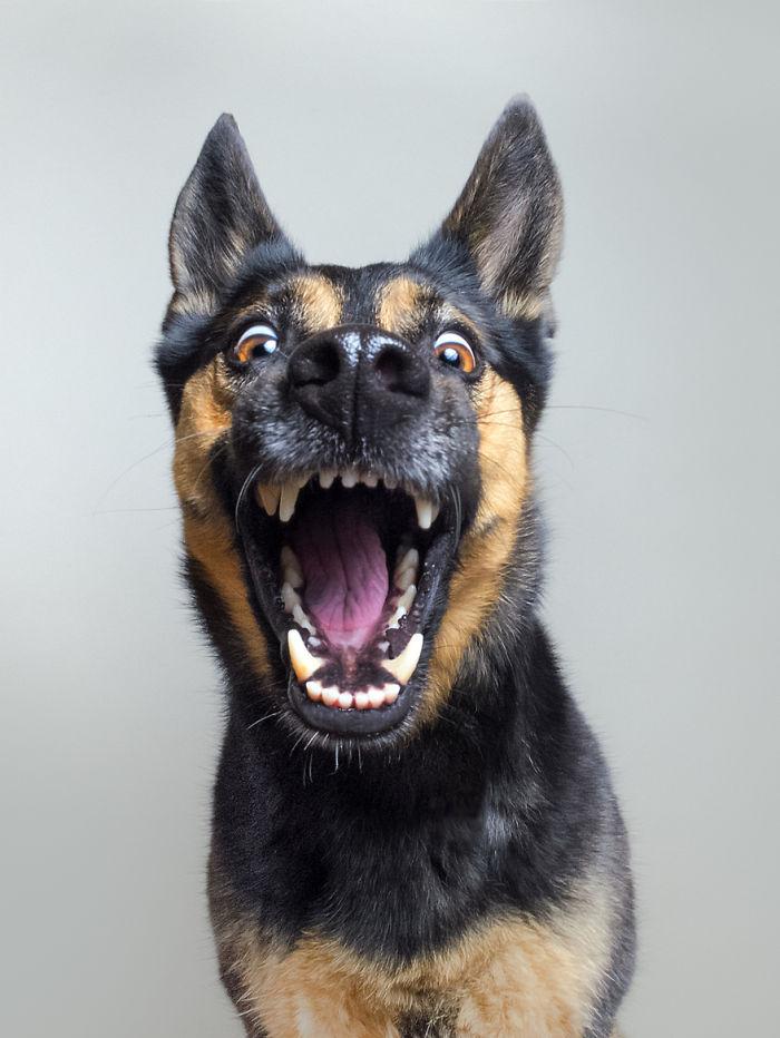 expressive-dog-portraits-elke-vogelsang-1