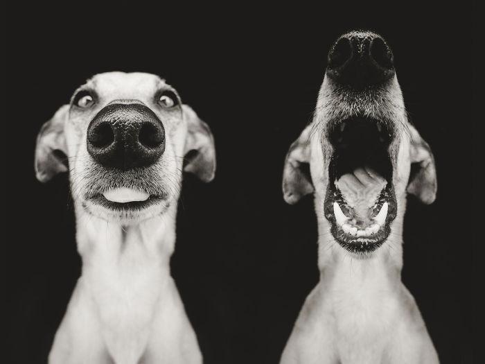 expressive-dog-portraits-elke-vogelsang-18