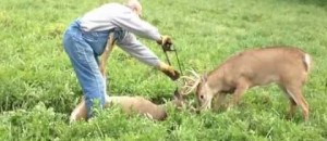 Brave Man Saves Stuck Deer