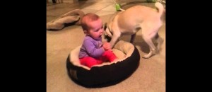 Dog Doesn't Want The Baby In His Bed And Does Not Know What To Do