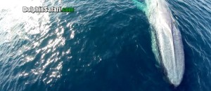 A Captain Flies A Drone Over The Ocean. When The Camera Zooms In, Your Draw Will Drop!