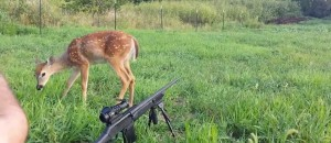 Hunting Fail- Deer Licks The Barrel Of The Gun