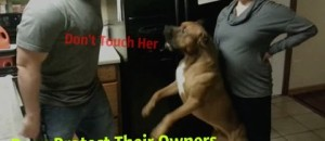 Man's Best Friend: Dogs Protecting their Owners Compilation