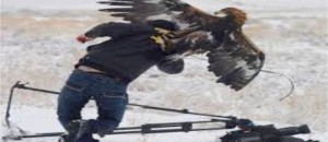 Top 7 Best Eagle Attacks (GRIZZLY,KANGAROO...& MAN) This Is Insane!