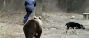 Top 5 BEAR Encounters