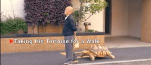 Cool! Man owns a pet turtle and takes it on long walks.