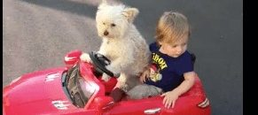 [Watch] Little Dog drives little boy around!